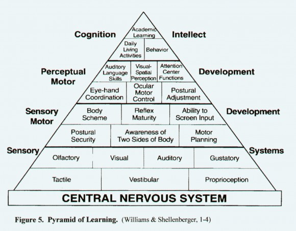 central nervous system hierarchy